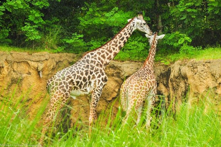 Wild Africa Trek 131