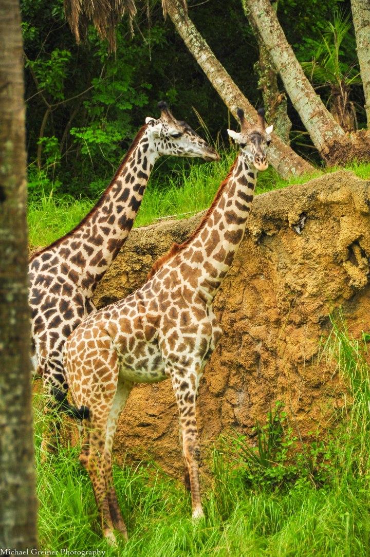 Wild Africa Trek 135