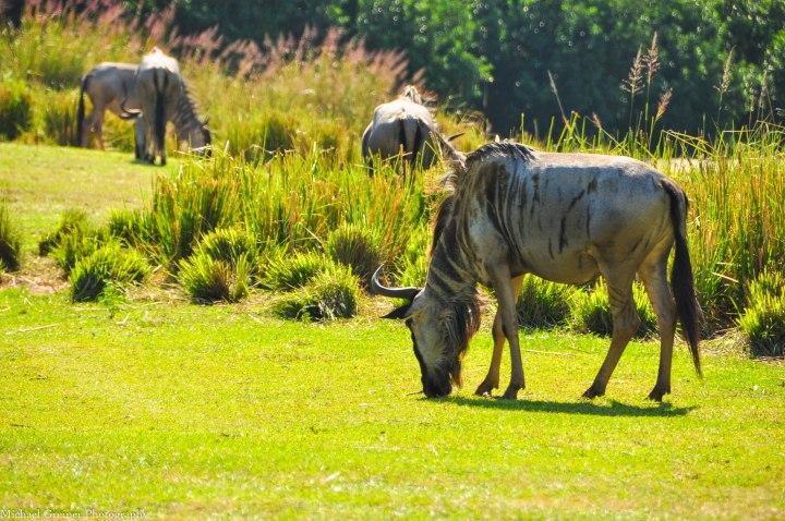 Wild Africa Trek 151