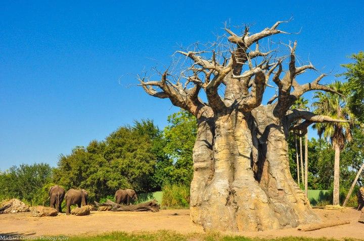 Wild Africa Trek 157