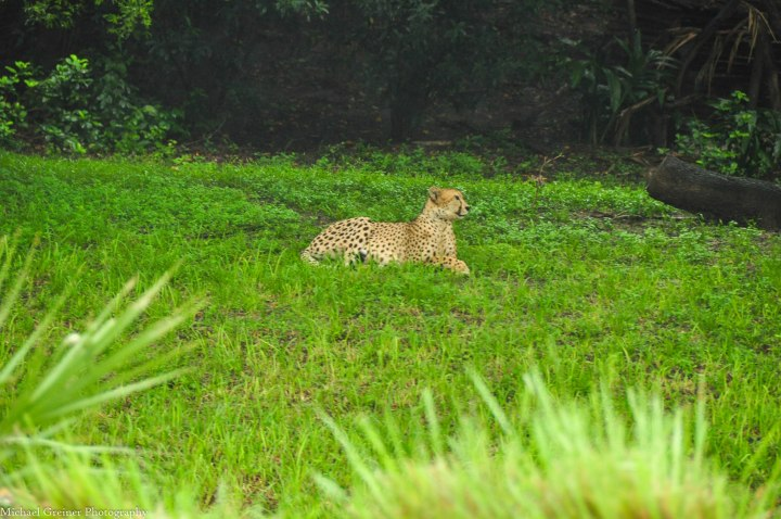 Wild Africa Trek 170