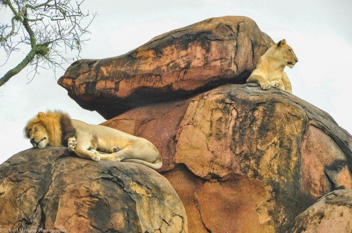 Wild Africa Trek 175